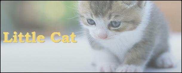 eyechatch_littlecat